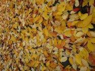 Autumn leaves carpet the path