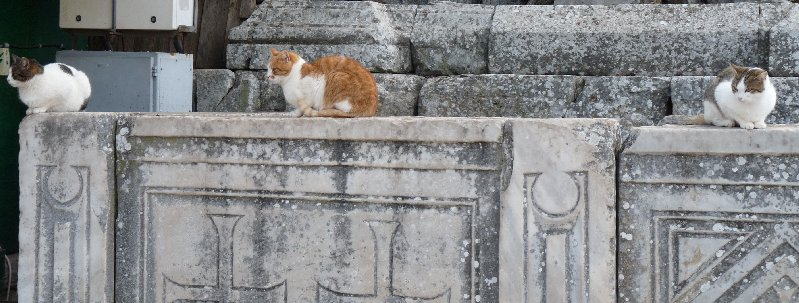 Cats are quite at home at Ephesus.
