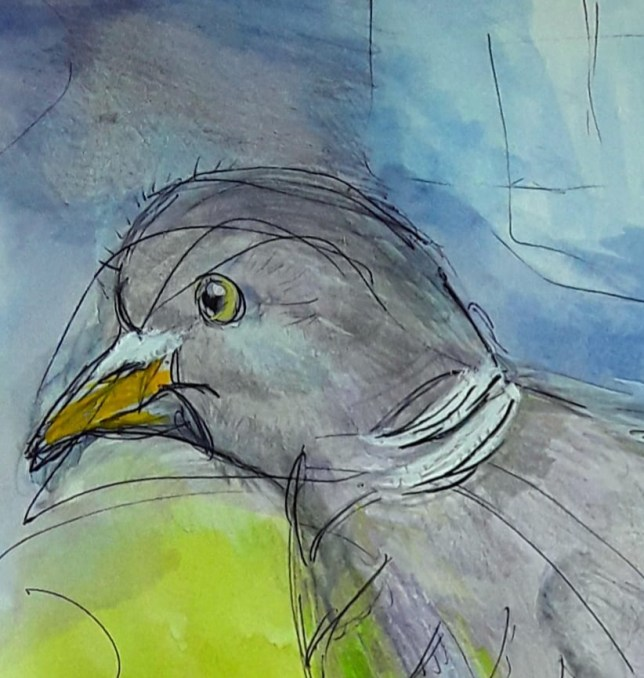 A close of the pigeon's face , her yellow beak and beady eye , set against blue sky and green grass - a world of colour .