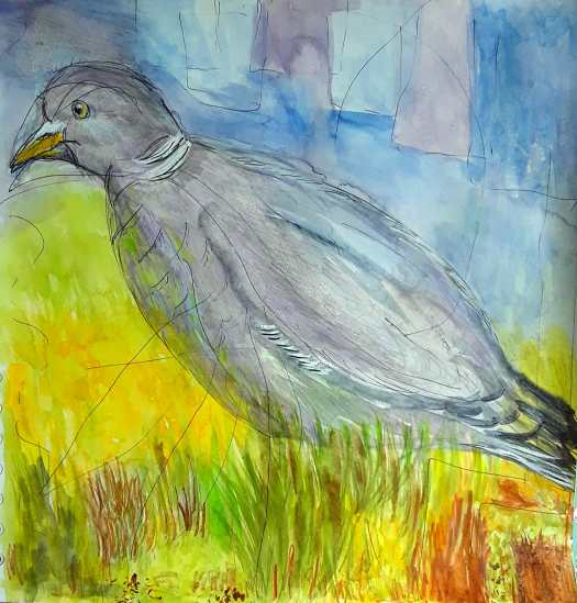 A mixed media pigeon in a loose watercolour style  , drawn first in pen , washed in watercolour ( grey and purple  ) and then finished with coloured pencils