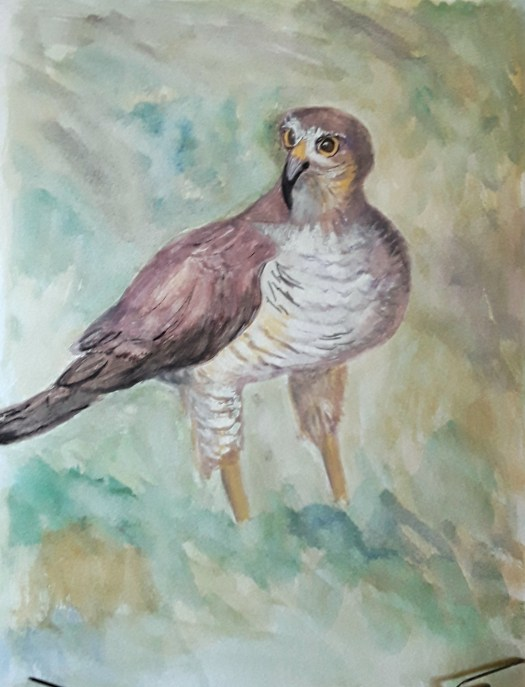 A gouache painting from my drawing twelve birds for Christmas challenge. A powerful sparrowhawk.