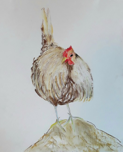A pastel drawing of a fluffy, white hen - one of my Christmas  birds.