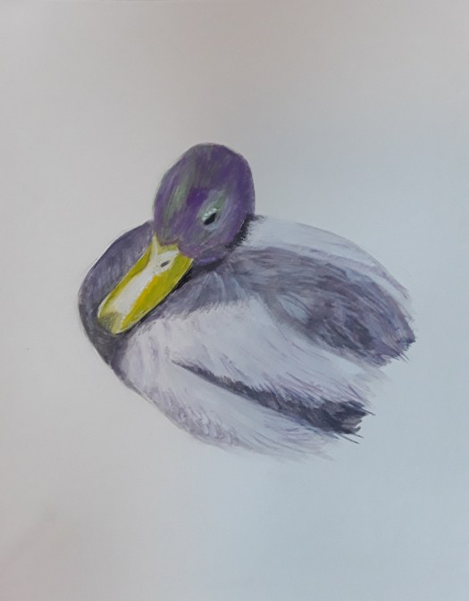 A little painting in gouache of a duck coming close to beg for food. A yellow beak and shiny green and purple feathers on the head. One of my Christmas birds.
