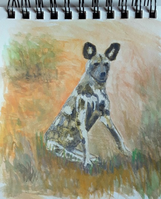 Painting Dogs  - a gouache portrait of a South African wild dog. His coat is patterned with irregular splotches of colour,  good camouflage in the grassland.