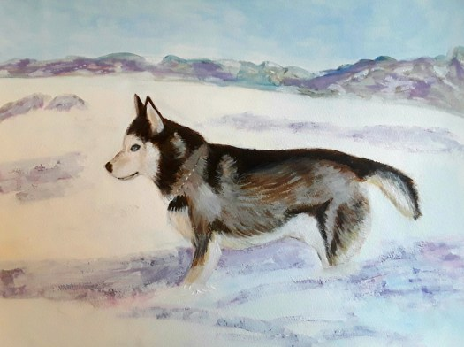 Painting dogs - an acrylic portrait of a young husky dog with a thick winter coat, waiting in the snow for the off.