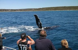 Whale Watching Margaret River