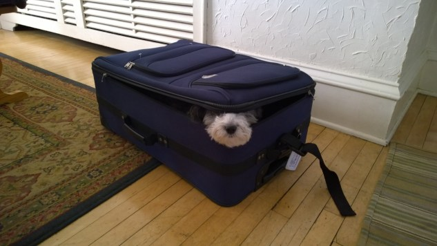 Daisy in suitcase