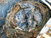 Parenthood, Fledglings, Marge Fenelon, Empty Nesters