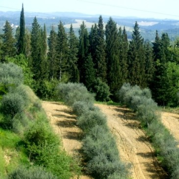 25 Favorite Photos of Tuscany