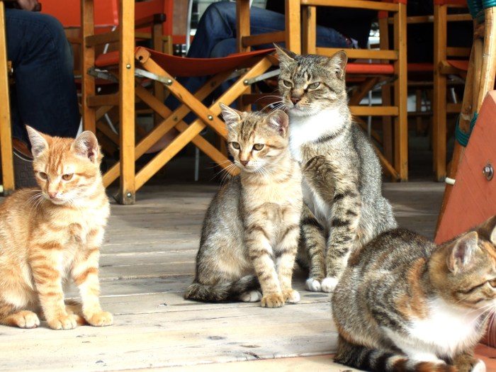 Positano-cats-of-Ialy Photo by Margie Miklas