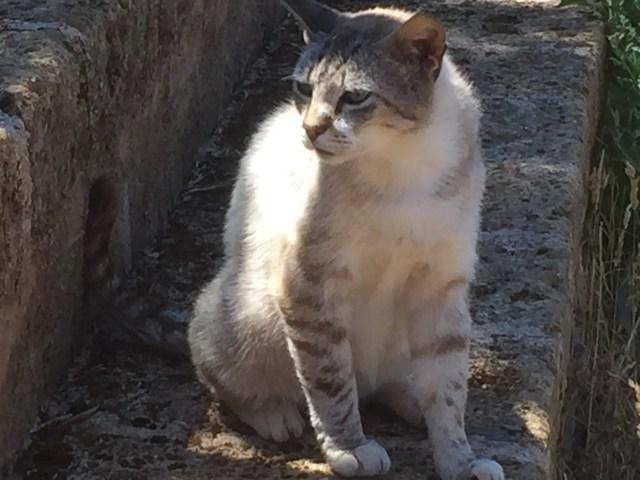 Farm cat in Puglia Photo by Margie Miklas