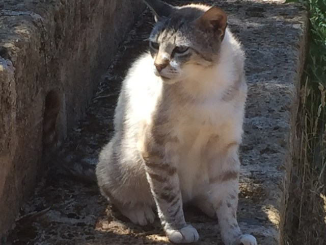 Farm cat in Puglia Photo by Margie Miklas