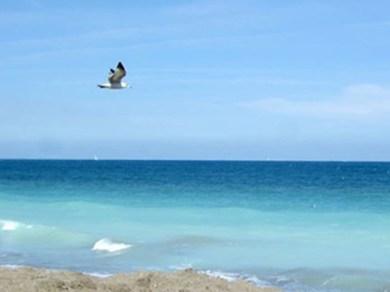 Hutchinson Island Beach Florida Photo by Margie Miklas