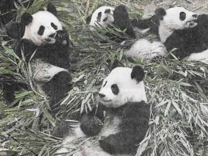 panda group website