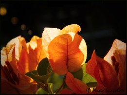 Orange flowers under the sun