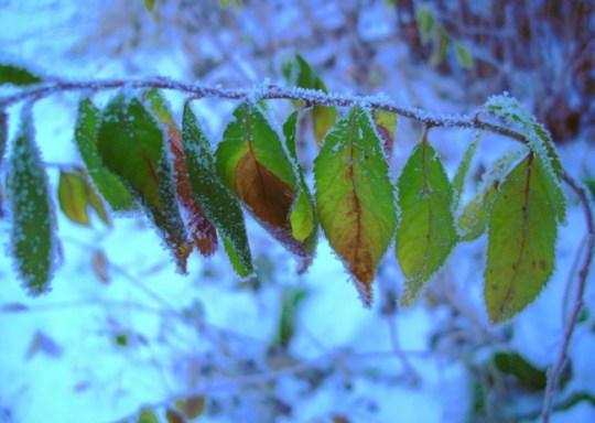 Die letzten bunten Blätter