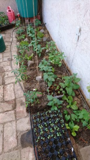 Pflanzen im Gewächshaus