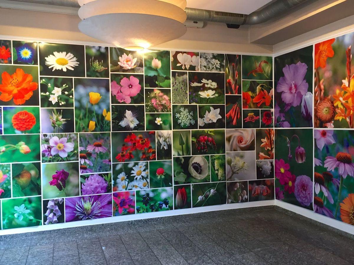 Blumenwiese für daheim