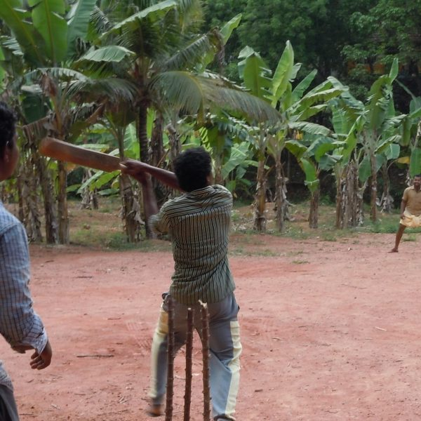 Men playing cricket in palm trees.