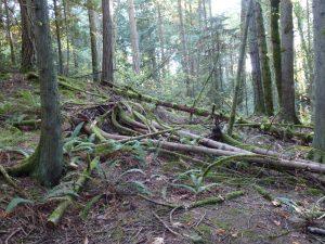 debris on forest floor