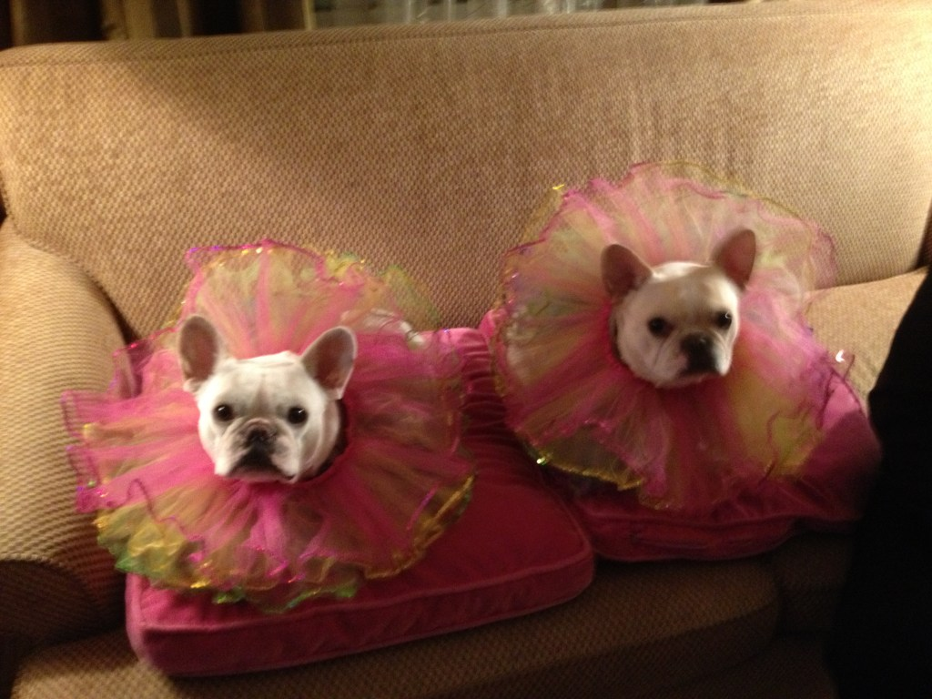 Margo Rey French Bulldogs