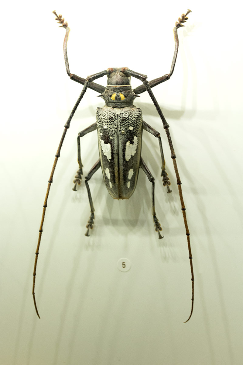 Insectarium 1