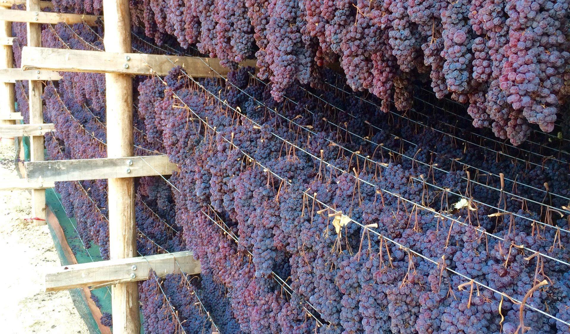 Grapes at Nemea, Tourism - Itineraries - Greek wine