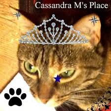 "Cassandra M's Place reviews ""My Picture Perfect Family"""