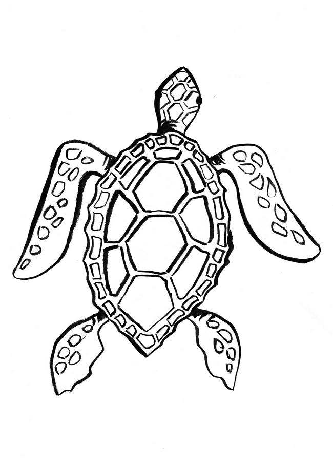 Coloriage tortue de mer marguerite le bouteiller - Dessin d une tortue ...