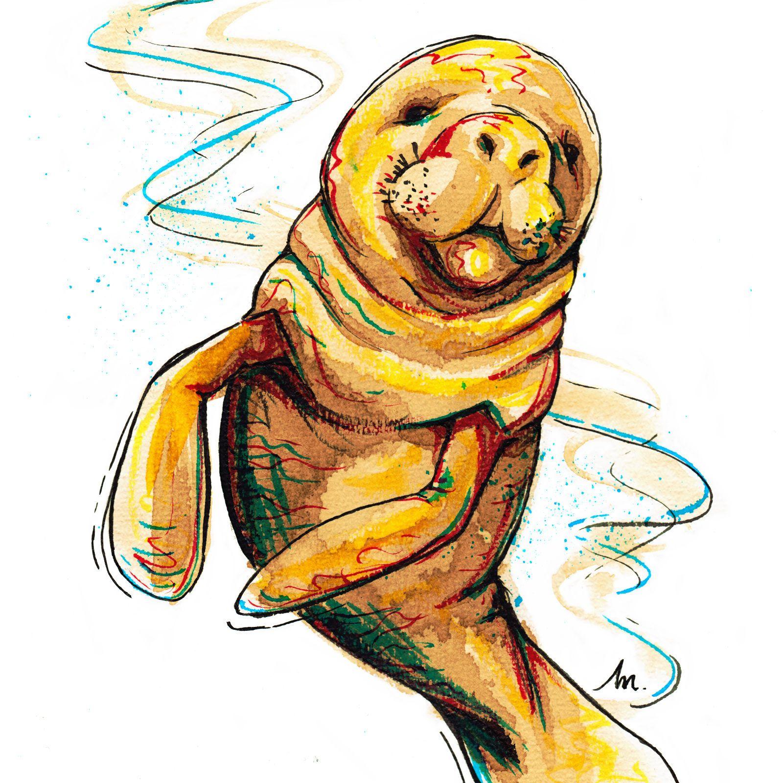 Bestiaire - Lamantin - illustration
