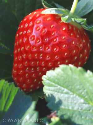 20070114_2.jpg