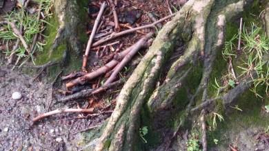 árbol_04