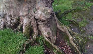 árbol_08