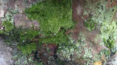 árbol_09