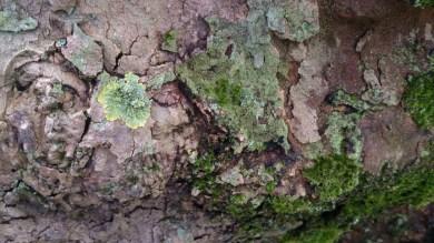 árbol_12