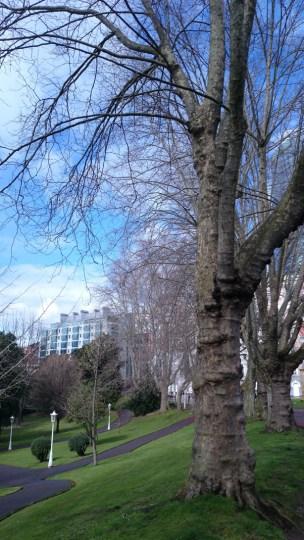 árbol_16