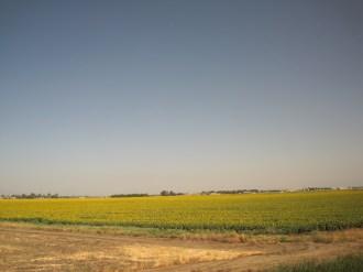 train-sunflower-fields