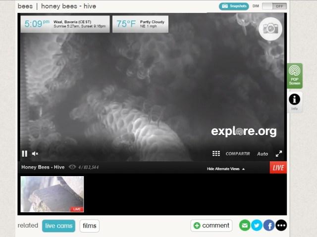 explore web abejas
