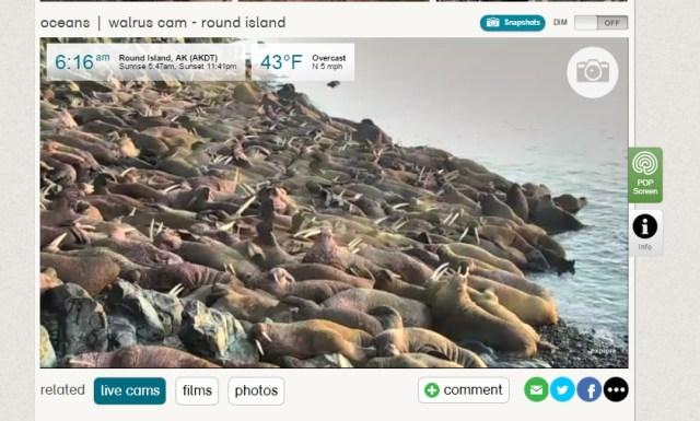 explore web walrus