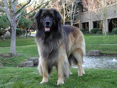 google-dog-yoshka