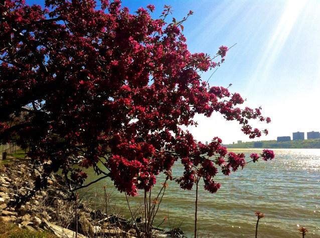 Day 215:2 hudson spring 2