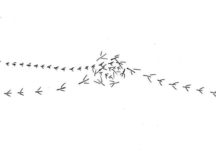 Drawing of what look like bird footprints