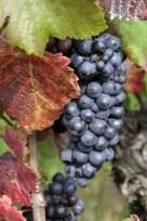 grapes-957322_1280