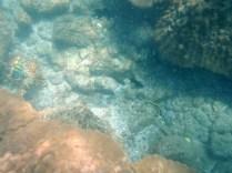 Peces de colores nadan entre los corales