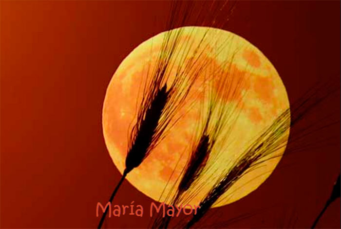 Ritual para la abundancia en la luna de Octubre (siete lunas cubre)