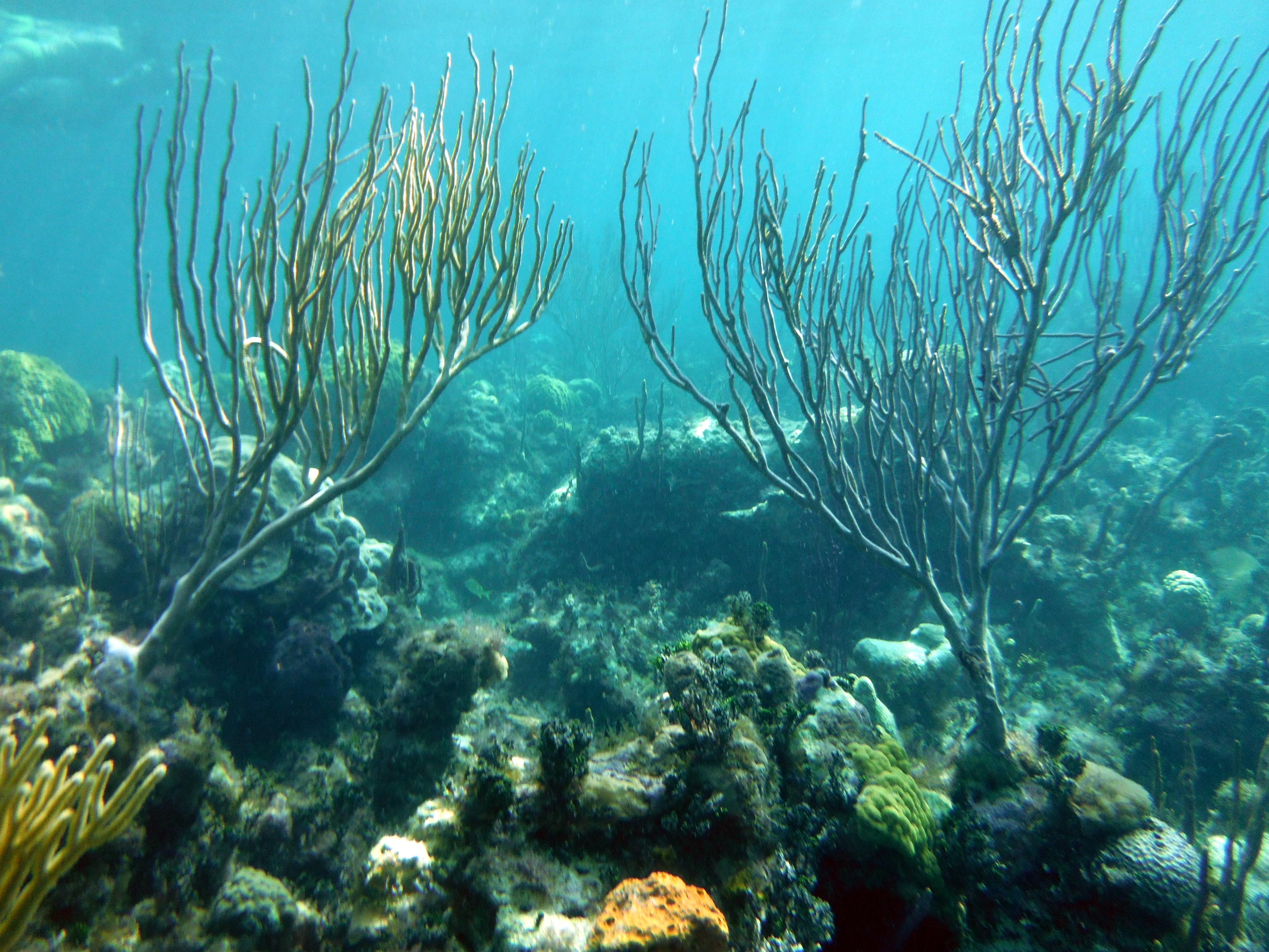 Photo Blog Under The Sea