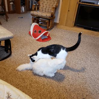 Bite a tail!