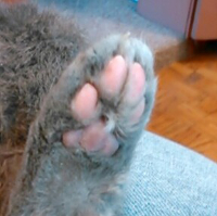 What A Wonderful Foot