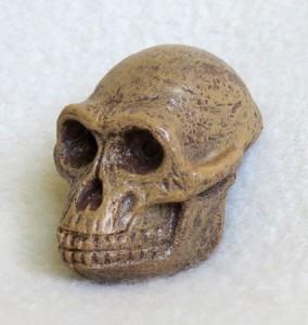 "<a href=""http://store.tapirback.com/australopithecus-fossil-skull-plastic-replica-f3524/"" target=""_blank"">Tapir And Friends</a>"