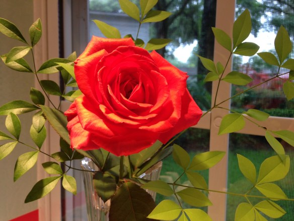 """A rose is a rose is a rose . . . ""  Gertrude Stein"